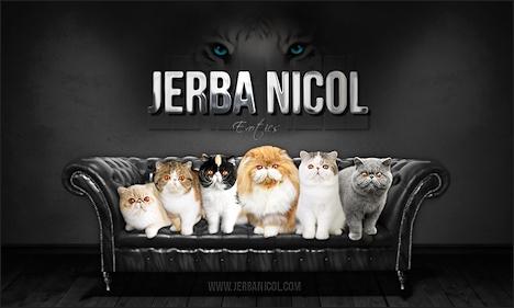 Cattery «Jerba Nicol»